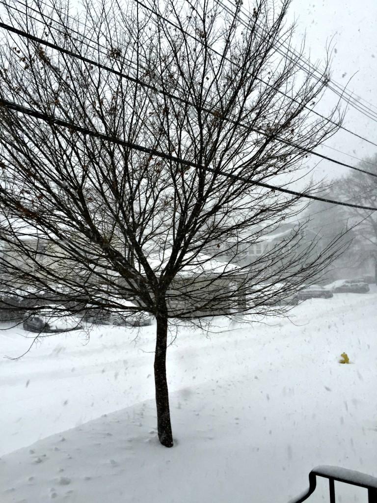 Blizzard of 2015: Juno